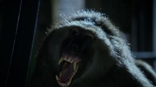 Zoo - 1x13-03