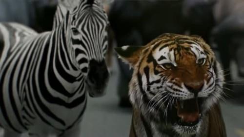 Zoo - 1x13-06